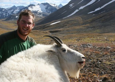 mountaingoat-trophy-hunting