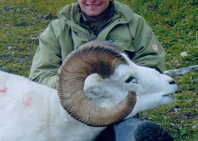 sheep061
